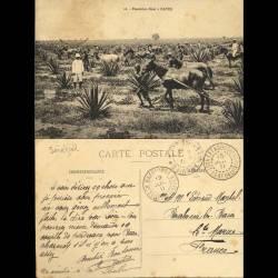 Sénégal - Plantation de Sizal à Kayes - Beau plan animé