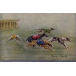 Course de lévriers - Sortie des boites - Couleur - Rare - Greyhound Racing