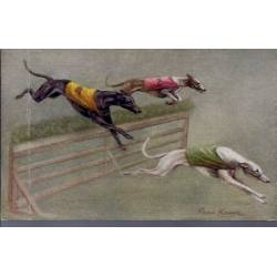 Course de lévriers - Saut d'obstacle - Couleur - Rare - Greyhound Racing