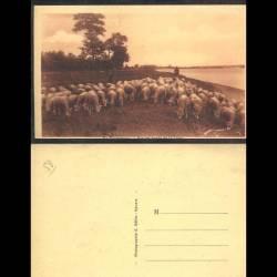 58 - En nivernais - Sur les bords de la loire - Moutons