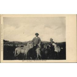 63 - Auvergne - Moutons aux...
