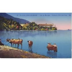 73 - Vaches au lac du Bourget