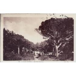 83 - Plage d'Hyeres - Les pins parassols