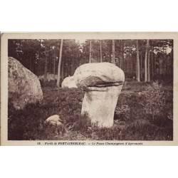 77 - Fontainebleau - La forêt - Le faux champignon d'Apremont - Non voyagé - D