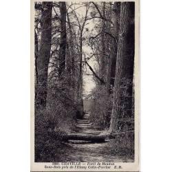 92 - Chaville - Forêt de Meudon - sous-bois près de l'étang colin-Porcher - Do