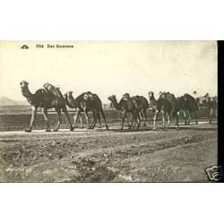 Algerie - Une caravane  - Chameaux