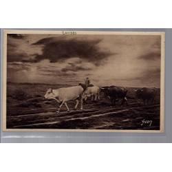 40 - Landes - Berger et son troupeau de vaches - Non voyagé - Dos divisé...