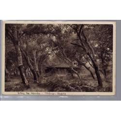 40 - Dans les Landes - Maison en bois entourée d'arbres, chênes - Non voyag...