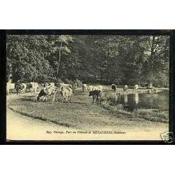 53 - Vaches au parc du chateau de Mezangers