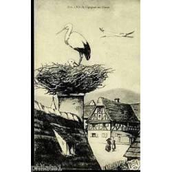 67 - Nid de cigognes en Alsace