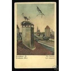 67 - Strasbourg - Les cigognes au nid