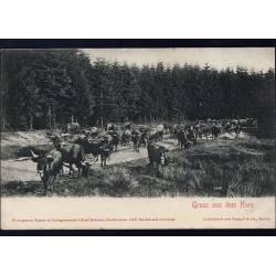 Allemagne - Gruss aus dem Harz - Troupeau de vaches